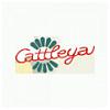 Květiny Cattleya